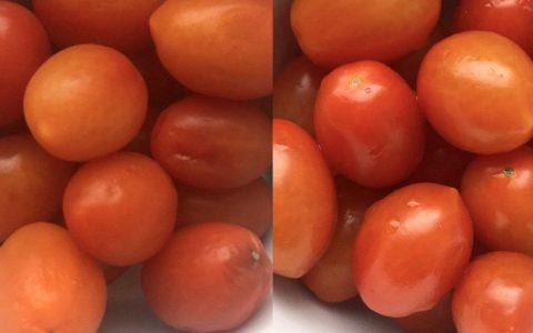 Revitalisierung von Tomaten