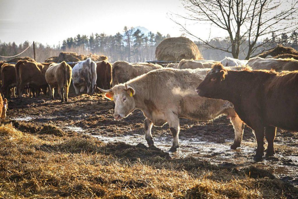 Ammoniak und Tierhaltung